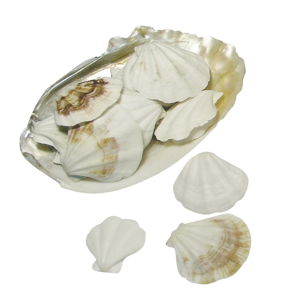 Shell-Muscheln, in Perlmuttschale